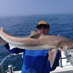 tope-katfish-charters-lymington