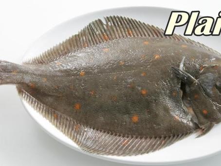 Back to Basics - Plaice Fishing