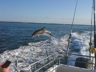 Dolphins are a regular sight on Solent marine Charters
