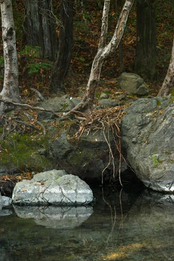 Like a Tree Planted by Streams of Water (1)