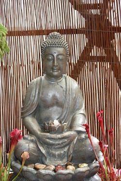 Peaceful Beings