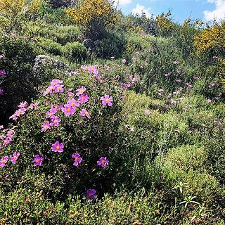Flowers in the Galilee.jpg