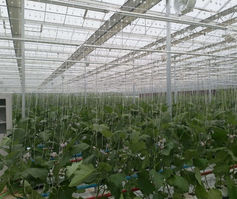 Growing orchids in China
