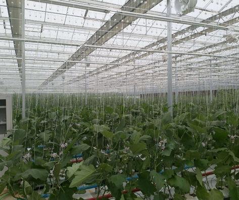 גידול סחלבים בסין