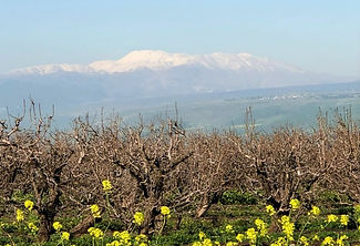Mt. Hermon a view from the Huleh valley.JPG