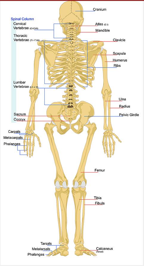 מה אומרת כל עצם?