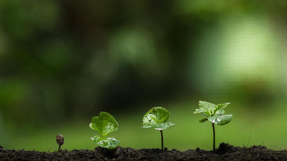 צמחים ואביזרים לגינה.jpg