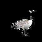 kisspng-canada-goose-bird-clip-art-canad
