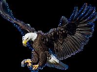 Bald-Eagle-Transparent-Images-PNG.png