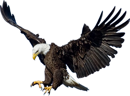 Bald-Eagle-Transparent-Images-PNG.png