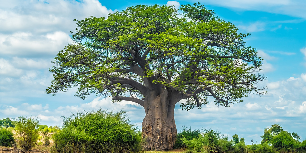 Baobab People Biennial Conference 2018 Beyond Tolerance: Building Sustainable Communities in the Age of Diversity