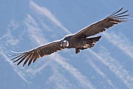 Ziua 7_Zborul condorului.jpg