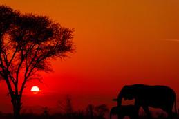 Ziua 11_Parcul Național Kruger.jpg