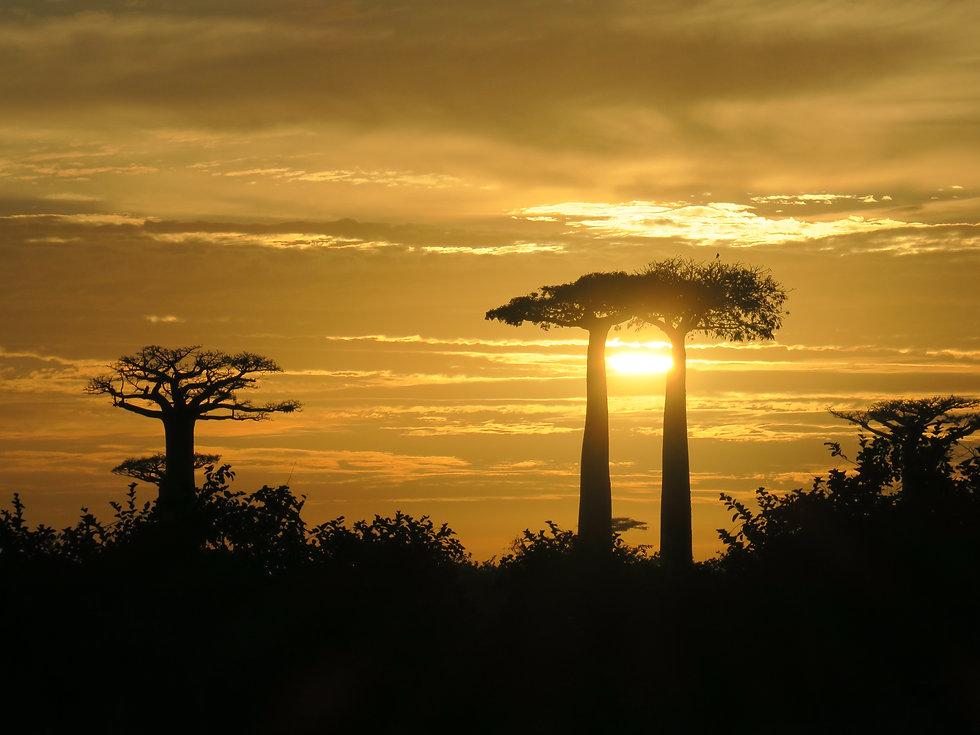 Motive de a vizita Madagascar_Răsărit de soare pe Aleea Baobabilor.JPG