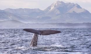 Ziua 7_Kaikoura Whale Watching.jpg