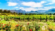Ziua 4_Cape Winelands.jpg