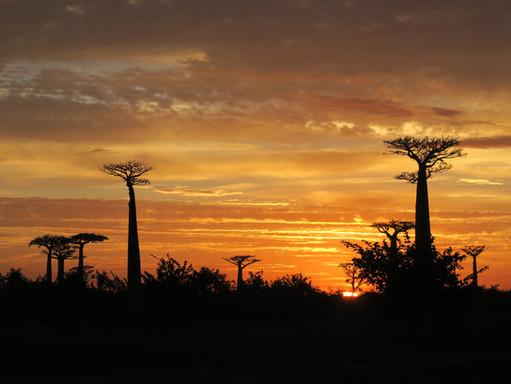 Cover Circuit Madagascar.JPG