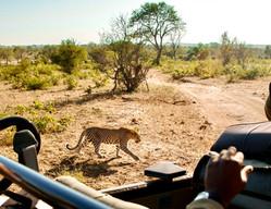 Ziua 13_Parcul Național Kruger.jpg