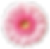 flower-png-22.png