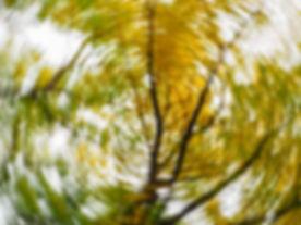 Tree spinning.jpg