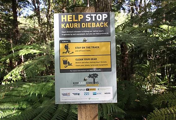 Kauri Dieback Certification Training - June 2020