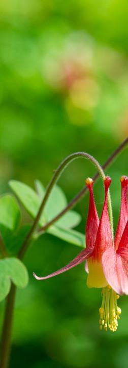 05072019-Gardeners-Climbers-Flowers-8952