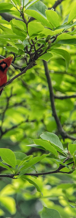 05072019-Gardeners-Climbers-Flowers-9286
