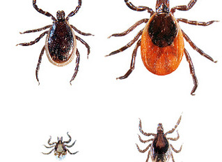 Lyme Disease and Physical Therapy