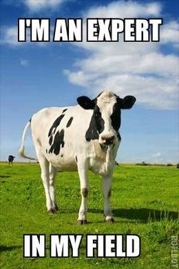 Feeling stressed? Cuddle a cow.