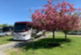 Apple Blossoms on a tree next to a motorhome