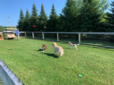 Watch for our Dog Olympics next year!