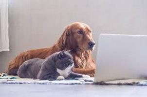 catdogtelehealth.jpg