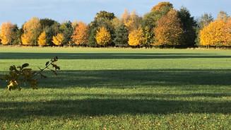 Autumn colou