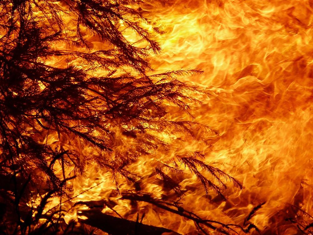 Devastating loss from the Australian bushfire situation