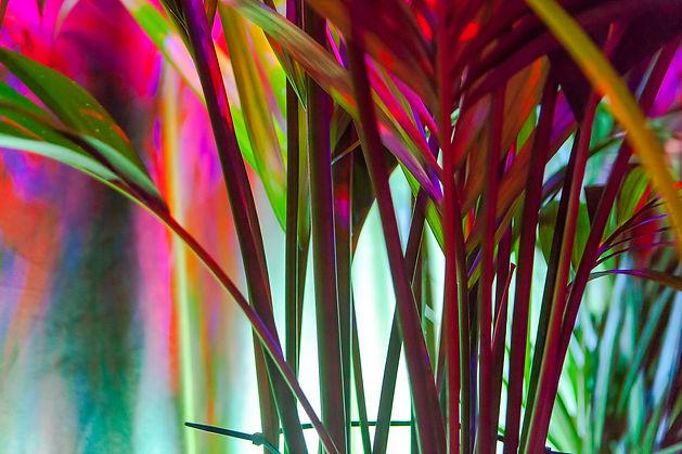 PiP's Colour Paradise.JPG