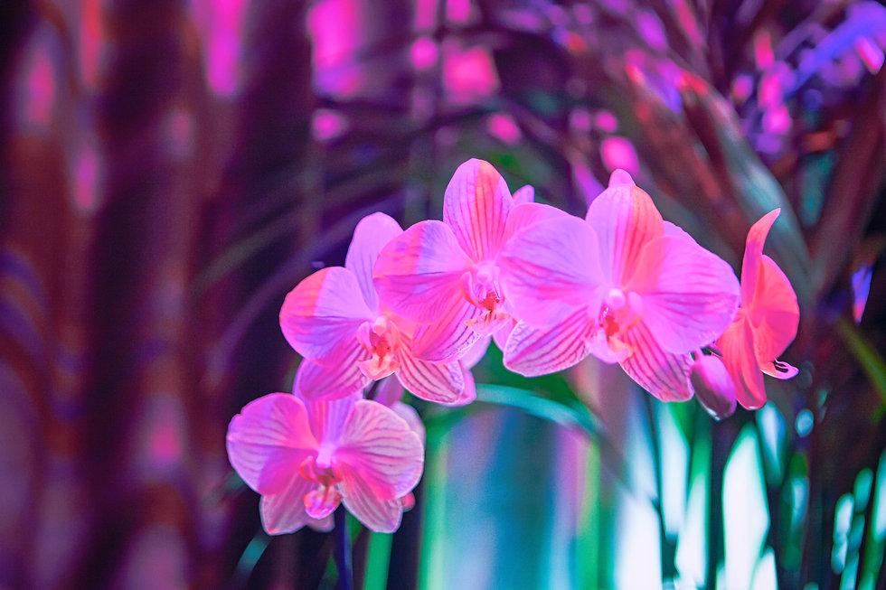 PiPs Plants 5D5-Edit.jpg