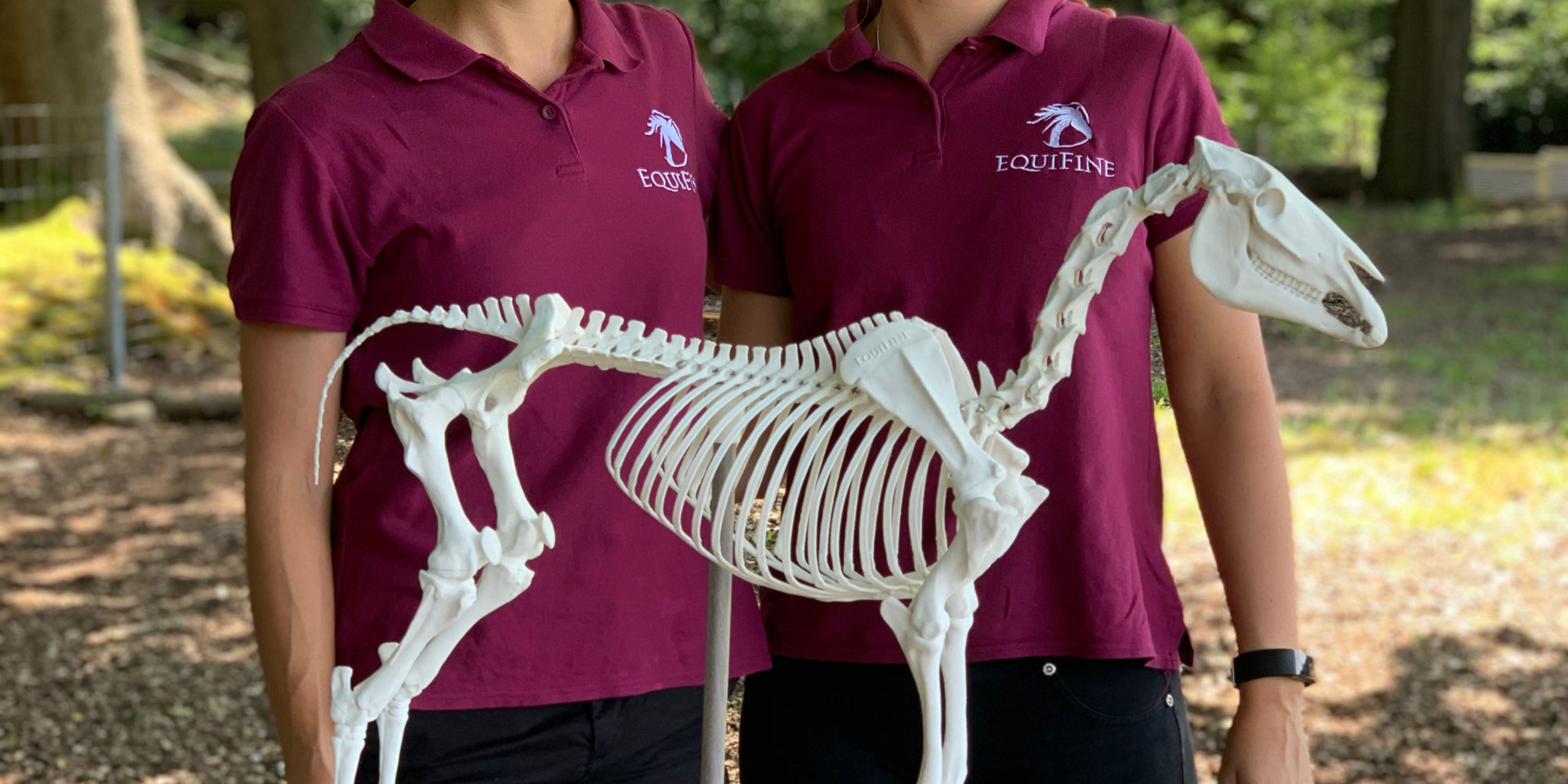Anatomie- und Biomechanikkurs