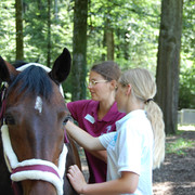 Persönlich und mit Spass - Pferdeantomie erlernen mit EquiFine