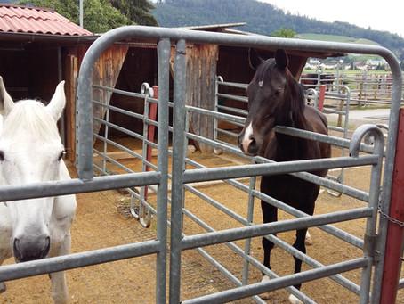 Meine ersten Berührungen mit Horsemanship