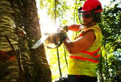 Utility Arborist