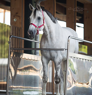 Pferd_3.jpg