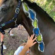 Halswirbelsäule Pferd, bemalen, Anatomie- und Biomechanikkurs von EquiFine
