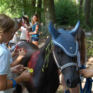 Anatomie am Pferd einzeichnen mit EquiFine
