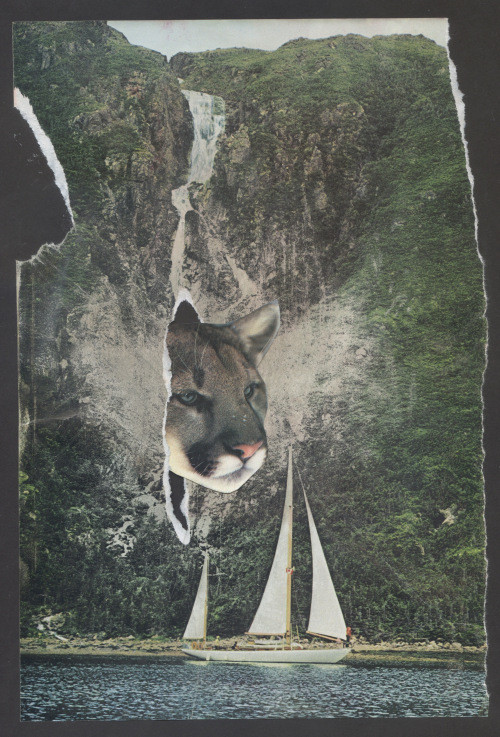 Kevin Sampsell_cougar_cave collage.jpg