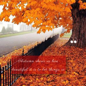 Aparigraha - Autumn, letting go