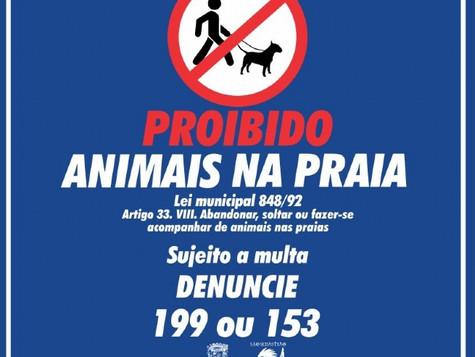 Prefeitura inicia campanha de conscientização sobre proibição de animais nas praias