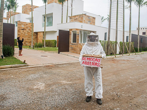 Retirada de enxame de abelhas