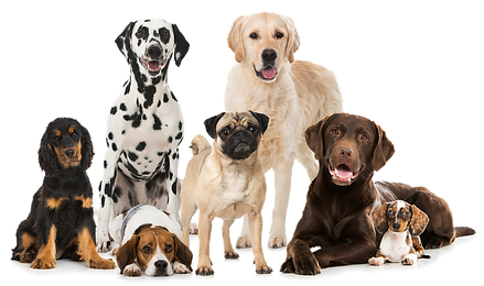 dog-group-transparent.png