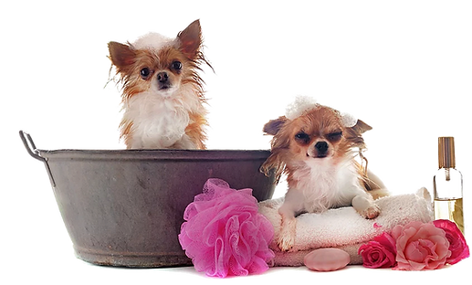 Bath Dogs v2.png