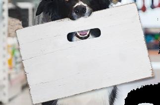 Dog com Placa na Boca - Placa e Fucinho